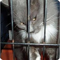 Adopt A Pet :: Precious - Westfield, MA