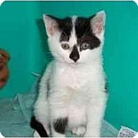 Adopt A Pet :: Petunia - Secaucus, NJ
