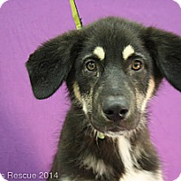Adopt A Pet :: Ducati - Broomfield, CO