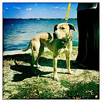 Adopt A Pet :: Giselle - Ft. Myers, FL