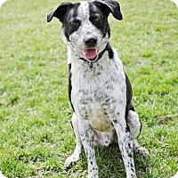 Adopt A Pet :: Flash (reduced adoption fee) - Howell, MI