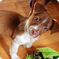 Adopt A Pet :: Kyler - Rocky Mount, NC