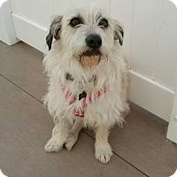Adopt A Pet :: Frodo - Valencia, CA