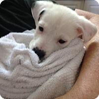 Adopt A Pet :: Matilda - Alpharetta, GA