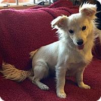 Adopt A Pet :: Sprout - Phoenix, AZ