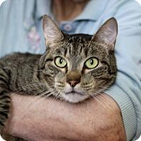 Adopt A Pet :: Prince - Hillsboro, IL