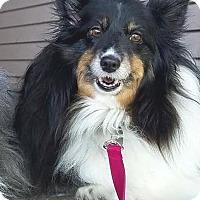 Adopt A Pet :: Samantha - Circle Pines, MN