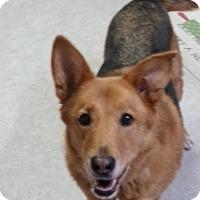 Adopt A Pet :: Tippy - Louisville, KY
