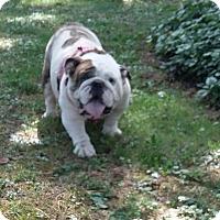 Adopt A Pet :: Gigi - Columbus, OH