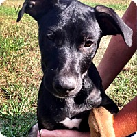 Adopt A Pet :: Valentine - The Woodlands, TX