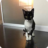 Adopt A Pet :: Tonks - Toronto, ON