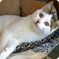 Domestic Shorthair Kitten for adoption in Manitowoc, Wisconsin - Ra