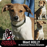 Adopt A Pet :: Holly - Spring City, PA