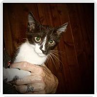 Adopt A Pet :: HENNA - Medford, WI