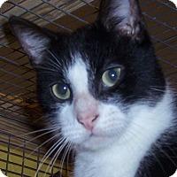 Adopt A Pet :: Kiko - Floral City, FL