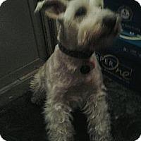 Adopt A Pet :: Mr. Muffin - Upper Sandusky, OH