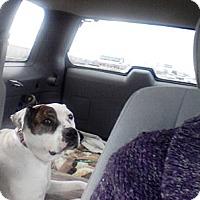 Adopt A Pet :: Sadie - Long Beach, NY