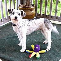 Adopt A Pet :: Lovie - Mocksville, NC