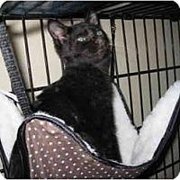 Adopt A Pet :: Jaws - Davis, CA