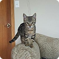 Adopt A Pet :: Jersey - Edmonton, AB