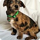 Adopt A Pet :: Jangle