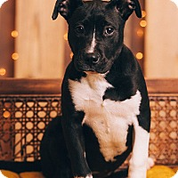 Adopt A Pet :: Vicky - Portland, OR