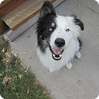 Adopt A Pet :: Jackson - Denver, CO