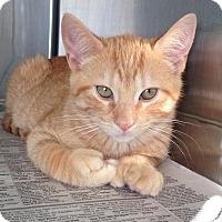 Adopt A Pet :: Sasquatch - East Brunswick, NJ