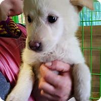 Adopt A Pet :: Adan - Burlington, NJ