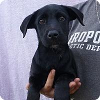 Adopt A Pet :: Tippy - Oviedo, FL