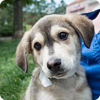 Adopt A Pet :: Mac - Suwanee, GA