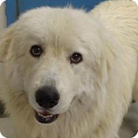Adopt A Pet :: Gator - Gulfport, MS