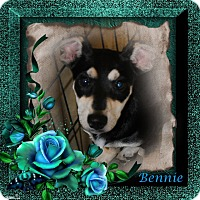 Adopt A Pet :: Bennie - Crowley, LA