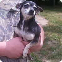 Adopt A Pet :: Jazz - Wallingford Area, CT