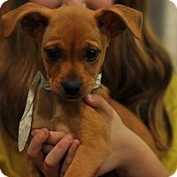 Adopt A Pet :: Jaxson - Sparta, NJ