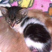 Adopt A Pet :: Sarah - Hudson, NY