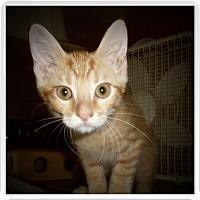 Adopt A Pet :: OWEN - Medford, WI