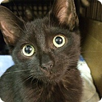 Adopt A Pet :: Harper - East Brunswick, NJ