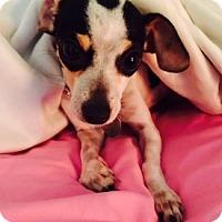 Adopt A Pet :: Billie Jean - Beavercreek, OH