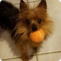 Adopt A Pet :: Angel - San Marcos, CA