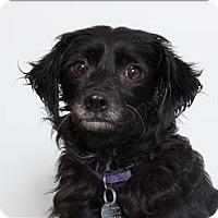 Adopt A Pet :: Everest - San Luis Obispo, CA
