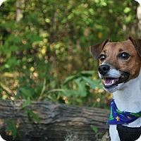 Adopt A Pet :: Schwartz - New Castle, PA