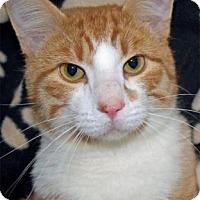 Adopt A Pet :: Oliver - Waupaca, WI