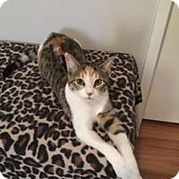 Adopt A Pet :: Rogue - Courtesy Listing - McKinney, TX