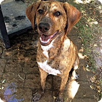Adopt A Pet :: Memphis **Courtesy Cupid** - West Allis, WI