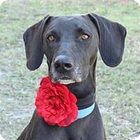 Adopt A Pet :: Trinity - Loxahatchee, FL