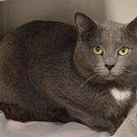 Adopt A Pet :: Blueboy - Ashtabula, OH