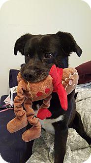 Labrador Retriever Mix Dog for adoption in Middletown, Ohio - Beau