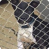 Adopt A Pet :: Bella Kay - Newport, KY