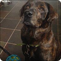 Adopt A Pet :: Snicker - Newport, KY